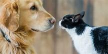 SAN VICENTE: presentan proyecto para proteger animales domésticos y la fauna silvestre